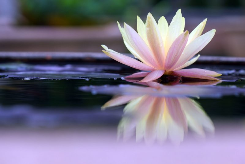 Creating a Calm Presence